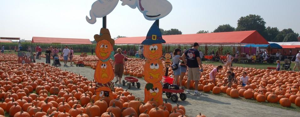 White post farm pumpkin picking