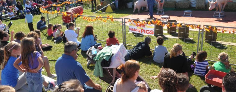Long Island Fall Farm Festival